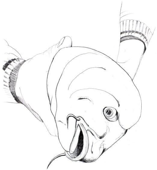 poisson+main